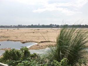 スジャータ村のサチホーム周辺、クシャグラスが生えている一帯
